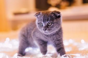 Little grey kitty walks over the light garlands