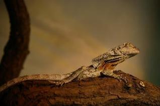 Lizard, zoo