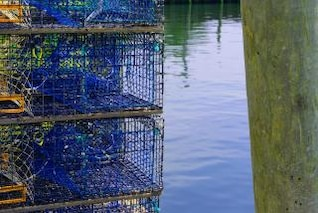 Lobster Traps, rows