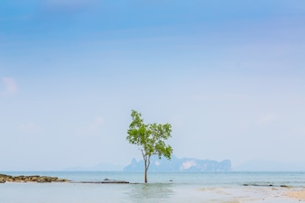 Lonely tree with sea background