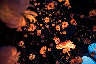 Look from below at beautiful chrysanthemums hanging on the threads in dark room