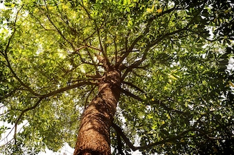 Look up view of forest tropical trees. nature green wood sunlight backgrounds. vintage tone color