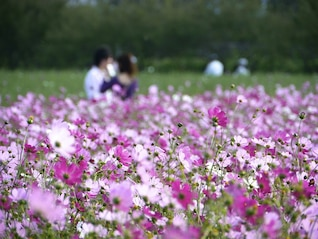love garden cosmos flower lover happy
