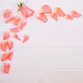 Lovely salmon petals and rose on top left corner of a white wooden background