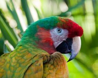 macaw  orange