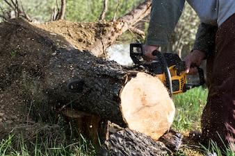 Man cuts a fallen tree