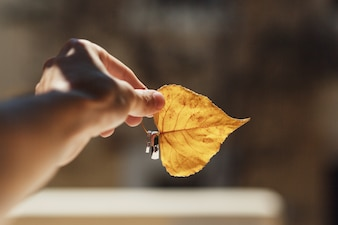 Man holds wedding rings on yellow leaf in the rays of sunlight