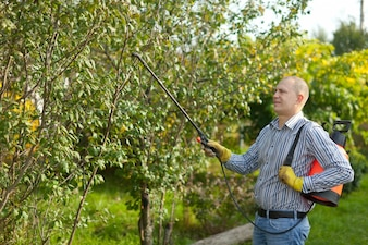 Man spraying tree branches