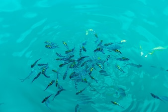 Many fishes in the sea