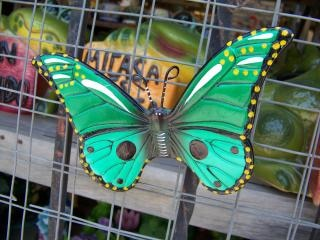 Mexican craft butterfly, life