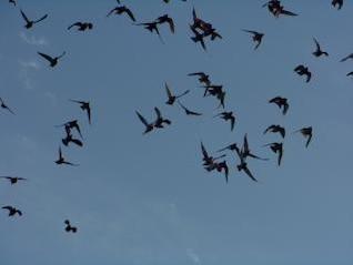 Migration, sky