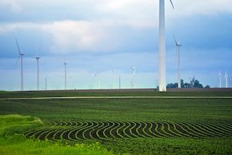 Minnesota Farmlands