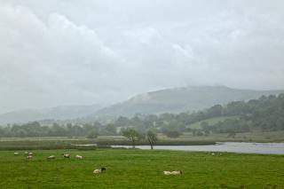 misty pasture   hdr  landscape