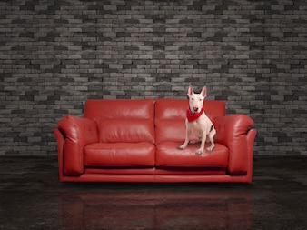 Modern couch with a dog sitting