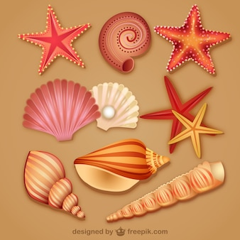 modern lovely seashell icon vector