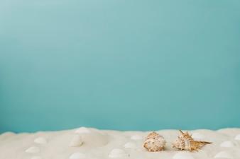 Mollusks on sand