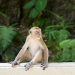 Monkey sitting on a white fence