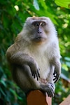 Monkey sitting on a wooden fence