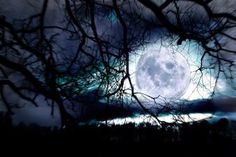 Moon between branches