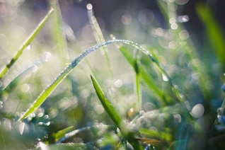Morning dew in the garden
