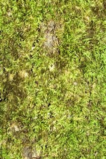 Moss  aging