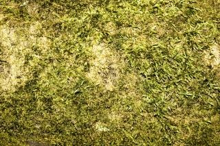 Moss, material
