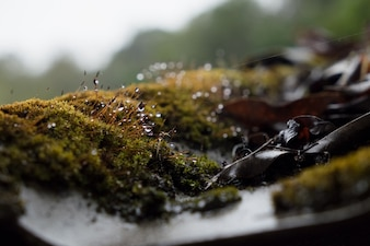 Moss and water drop growing on the roof tile