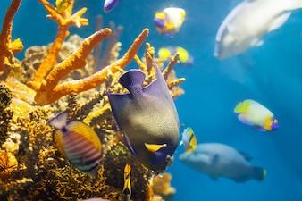 サンゴの多色の熱帯魚