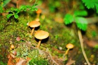 Mushrooms , food