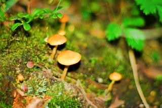Mushrooms , food