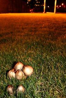 mushrooms  surreal