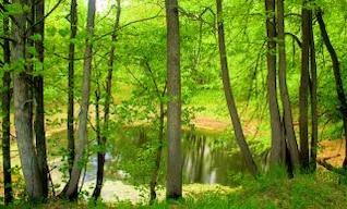 nature, con2011, bog