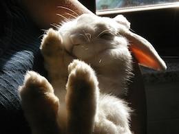 nature bunny bianca rabbit plush