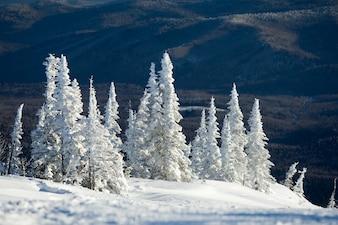 Nature frozen seasonal resort overcast