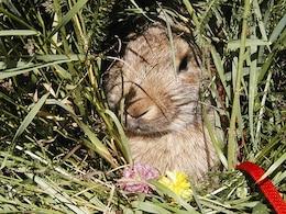 nature plush bianca rabbit bunny