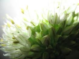 Nature simplistic beauty, plant