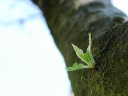 New Life, nature