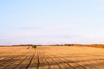 Newly cut autumn wheat field in a village in Moldova