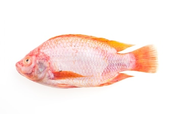 Nutrition healthy fin animal uncooked