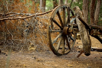 Old carriage in the forest