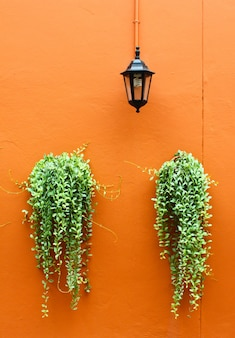 Old lamp with green plants on orange wall