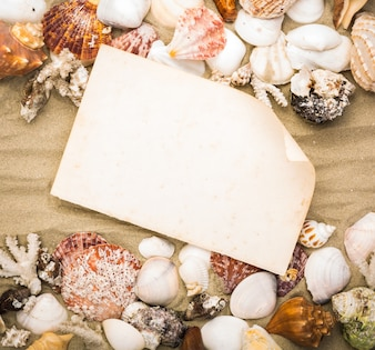 Old paper with seashells frame