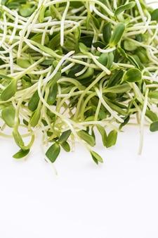 Organic health nature fresh green