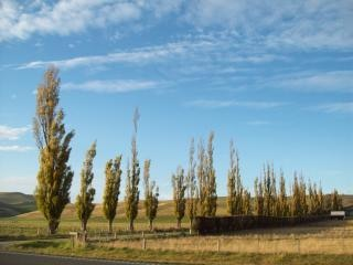 Otago- Canterbury Autumn / Fall