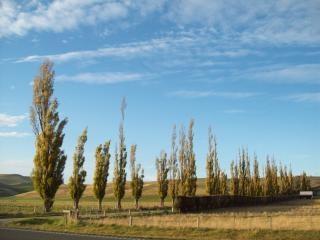 Otago- Canterbury Autumn / Fall