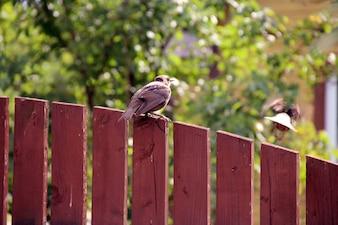Outdoors feather flyer blur flier