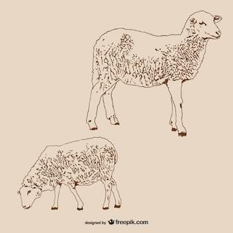 Pair of lambs