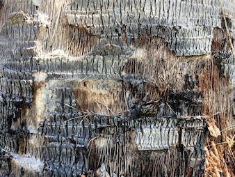 Palm Bark Peeled Off Texture