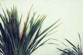 Palm tree and white wall
