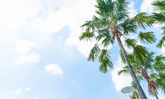Palm tree on sky